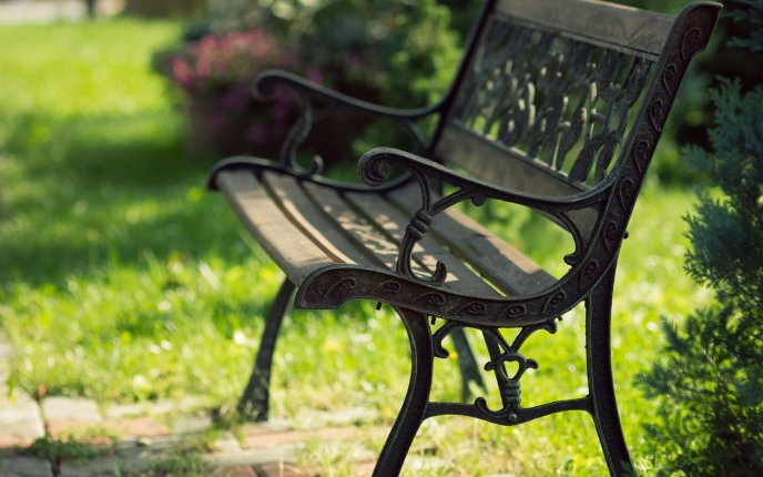Iron bench in the park - nature HD landscape