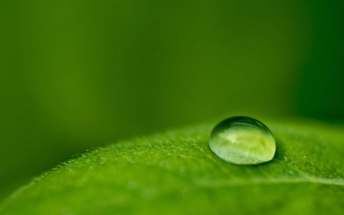 Macro big drop of water on a green leaf - nature wallpaper
