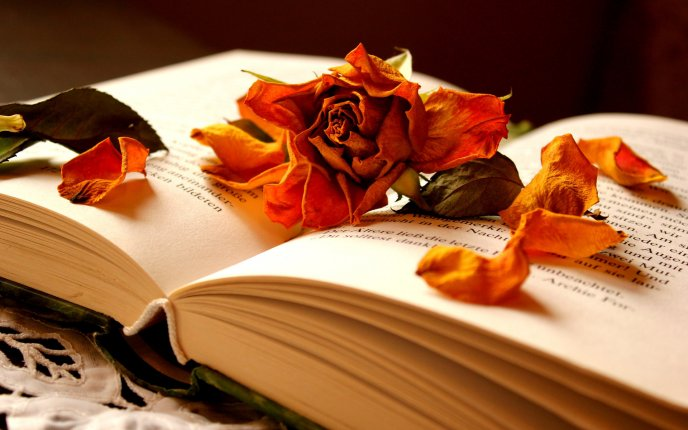 Autumn flowers in a book of memories