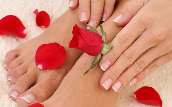 Rose petals on delicate feet - HD wallpaper