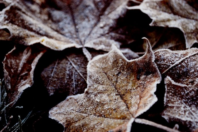 Frozen autumn leaves on the ground - HD wallpaper