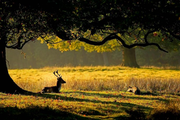 Sweet deer in the forest - beautiful sunset