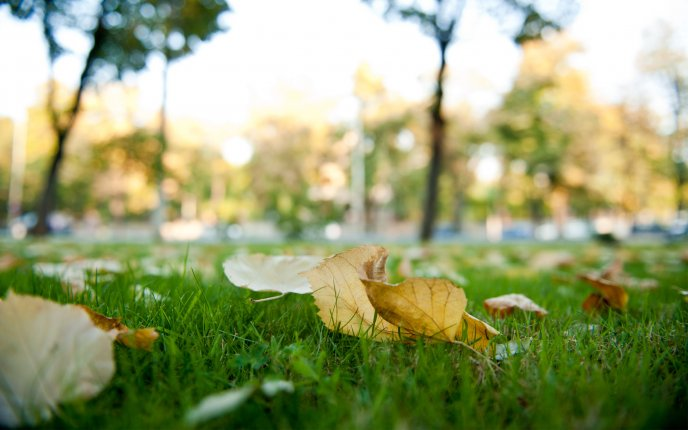Download Wallpaper Autumn Leaves On The Green Grass