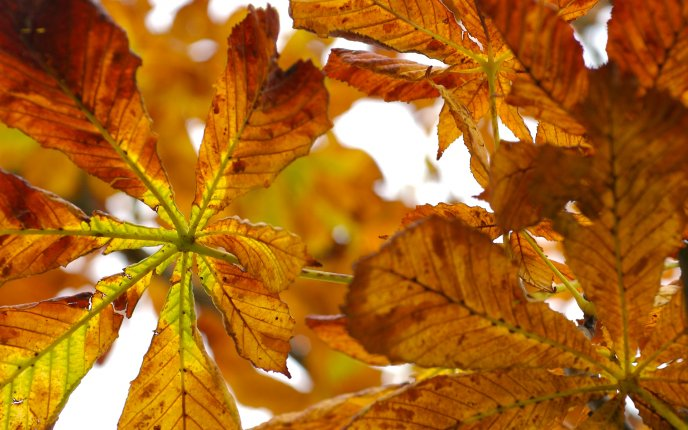 Beautiful autumn leaves - close up HD wallpaper