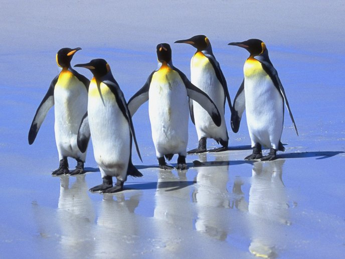 Download Wallpaper Five little penguins of the ice - HD wallpaper