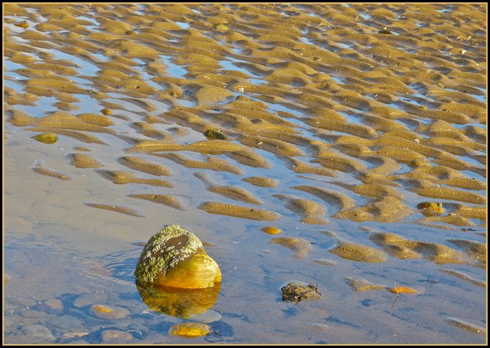 Golden sand in the water