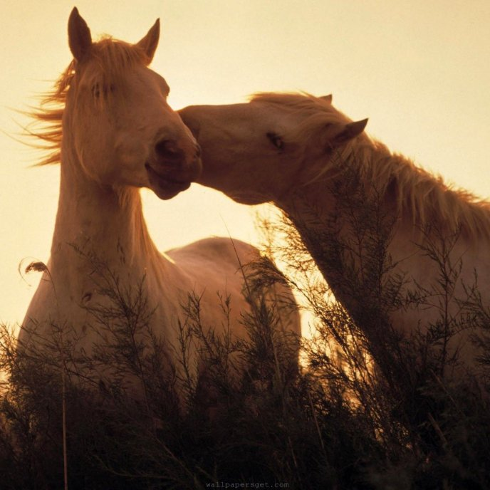 Sweet kiss from a horse - animal love