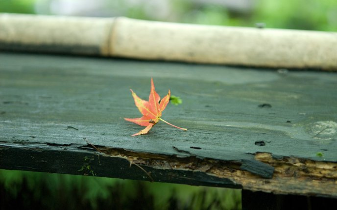 Artistic photo - autumn leaf on an old bench