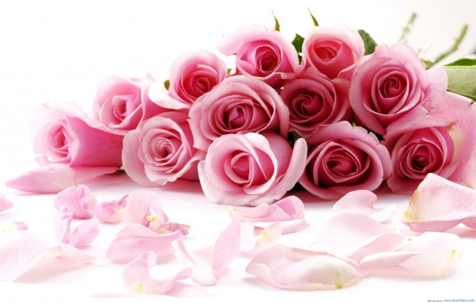 Beautiful pink bouquet of roses - Love moments