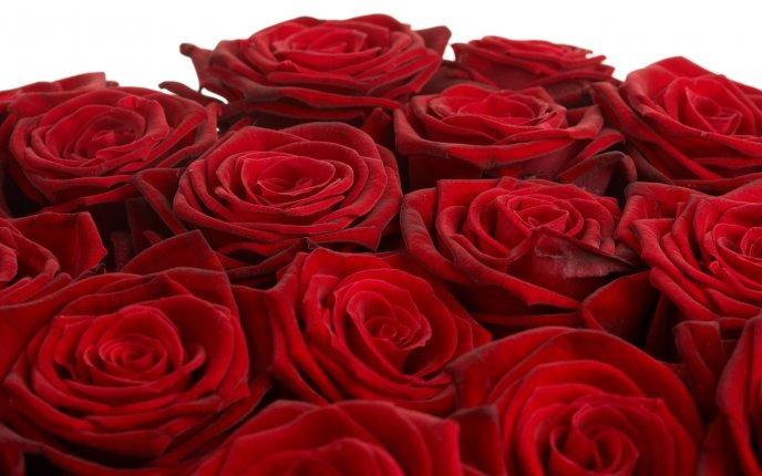 Beautiful bouquet of red roses with velvet petals