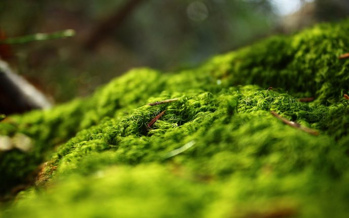 Beautiful green moss - wonders of the forest