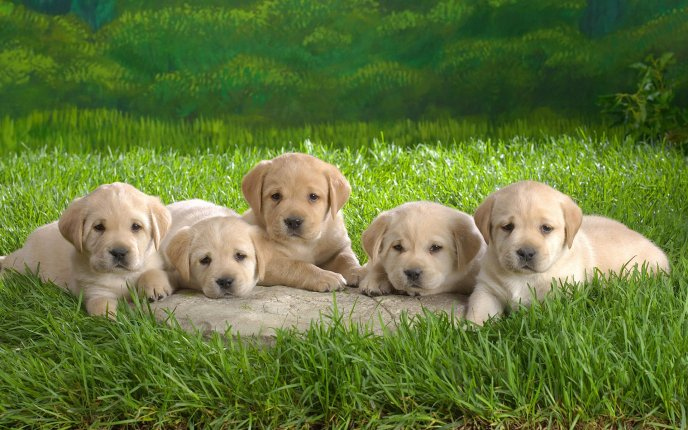 Five sweet little puppies - love and happiness