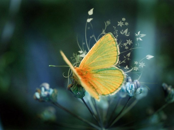 Fluffy yellow butterfly - HD wallpaper
