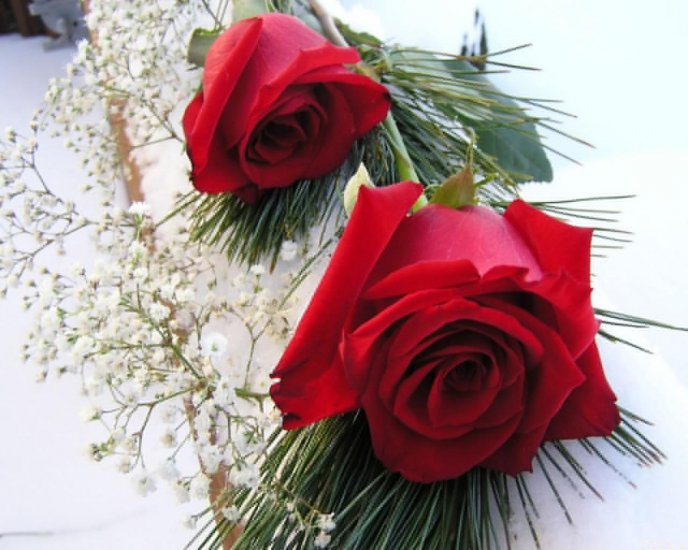 Red roses - the most beautiful flowers