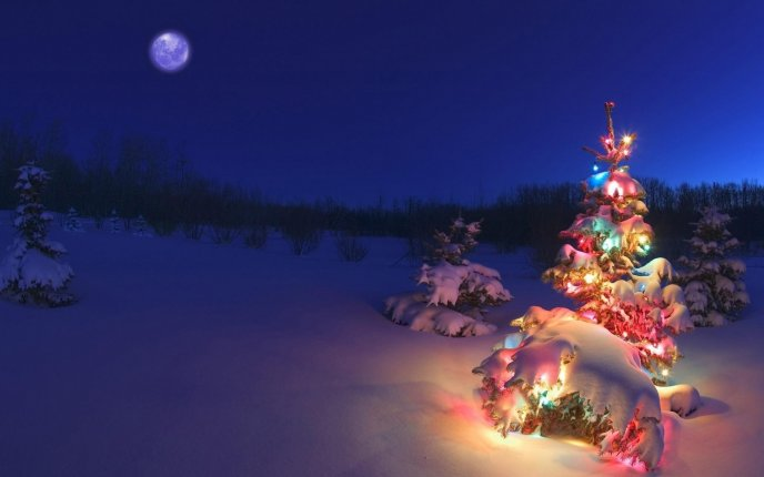 Lightning christmas tree in the snow - HD  winter wallpaper