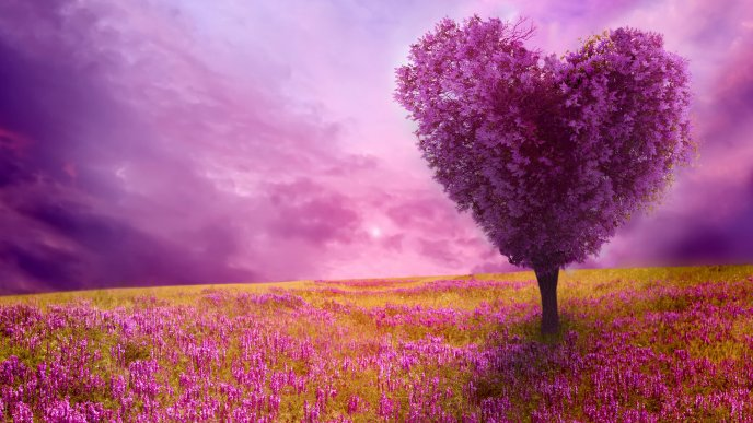 The lovers tree - Pink flowers on the field