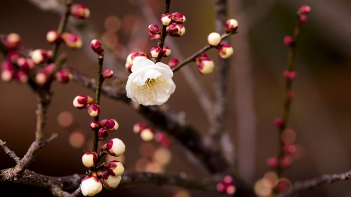 Blossom flowers - spring season and perfume