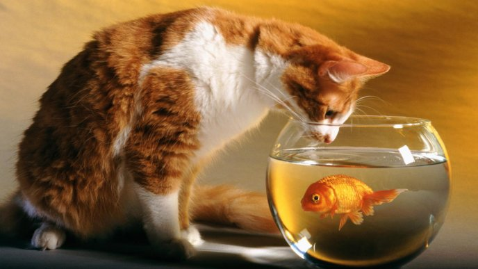 Beautiful cat and golden fish - best friends