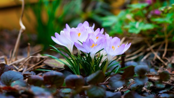 Spring flowers in the fresh grass hd beautiful wallpaper mightylinksfo