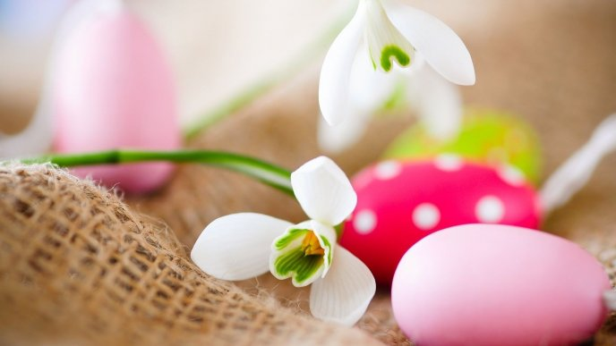 Little snowdrop and colored Easter eggs - Happy Holiday