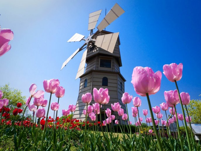 Windmills house and a beautiful garden with pink flowers