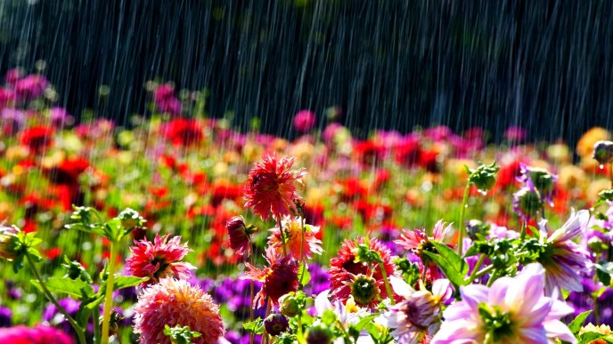 Rainy spring day colourful flowers in the garden download wallpaper rainy spring day colourful flowers in the garden mightylinksfo