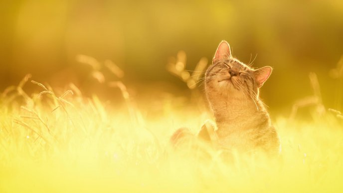 Golden cat and a beautiful sunny day
