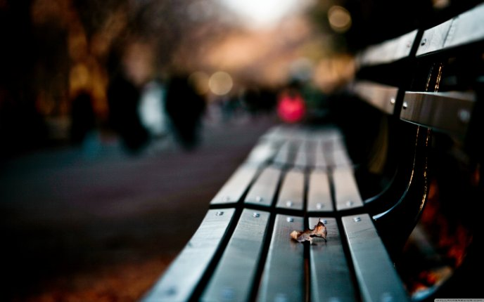 Source One Leaf On A Bench HD Blurry Wallpaper