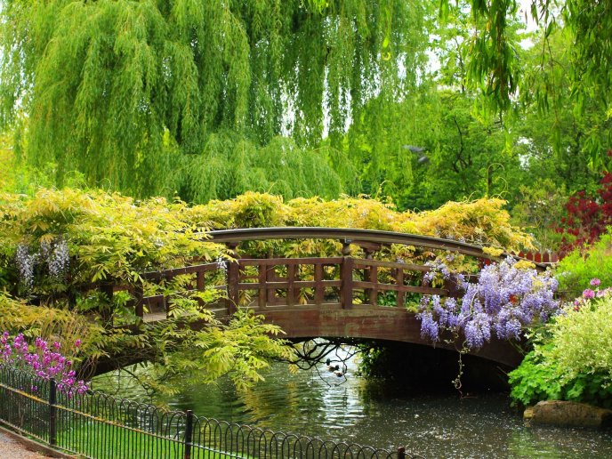 Beautiful colorful nature - Bridge over the river