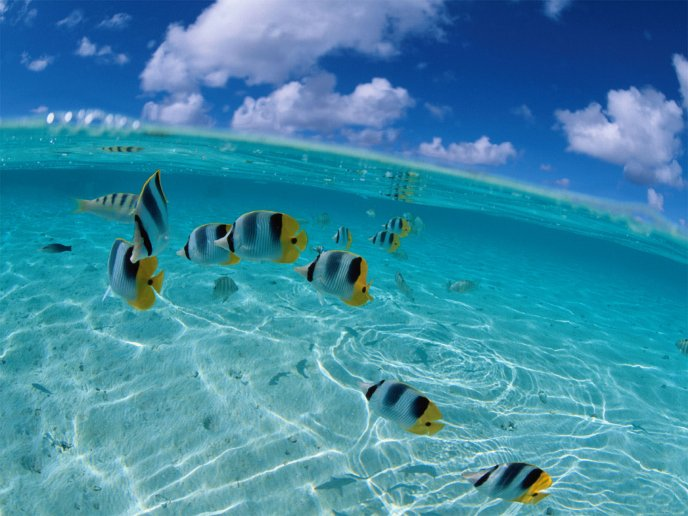 Many fish in the clean water of sea