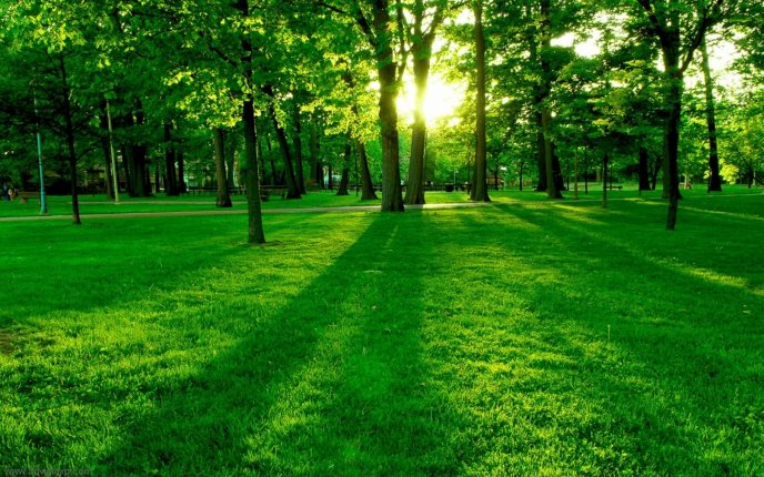 The golden sunlight through the green trees in the park