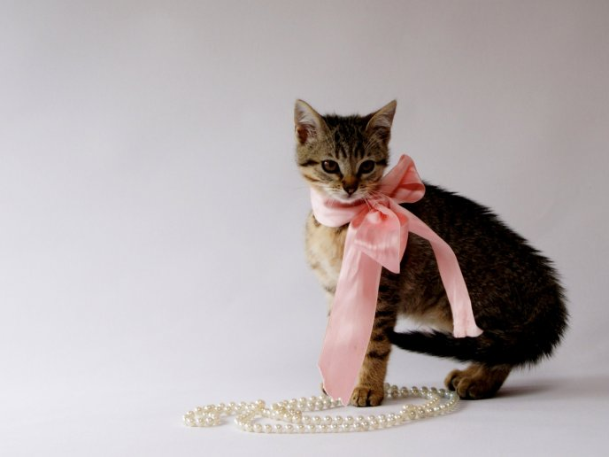 Cute cat with pink knot and white pearl