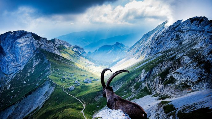 Brown mountain goat in a mountain top
