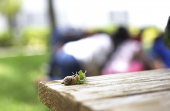 Little snail in the nature - blurry wallpaper