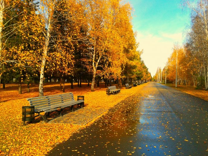 Sunny day in the park after an autumn rain - HD wallpaper