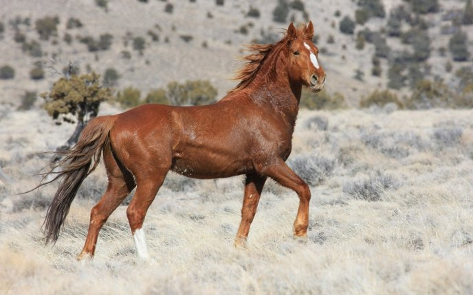 Stunning brown horse on the white field