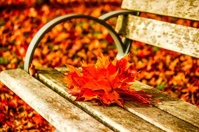 Autumn leaves on the bench in the park - HD wallpaper