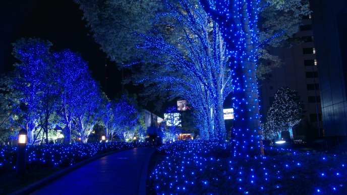 Blue light in the park - prepare for Christmas Holiday