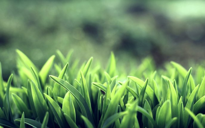 Download Wallpaper Fresh Green Grass In The Morning