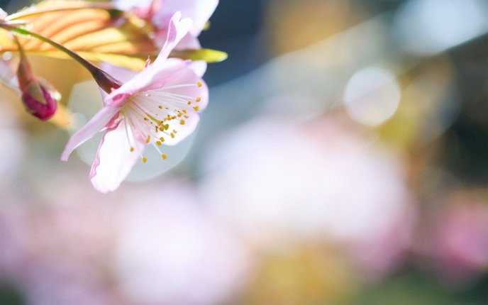 Spring perfume of beautiful trees flower