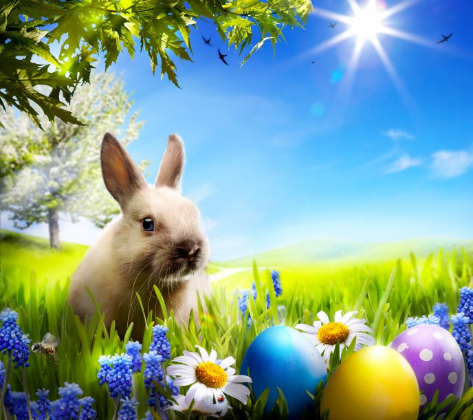 Download Wallpaper Beautiful Easter Bunny And Coloured Eggs
