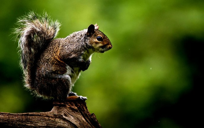 Wonderful squirrel on a tree trunk - Macro wallpaper