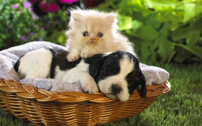 Little Friends Dogs and Cats