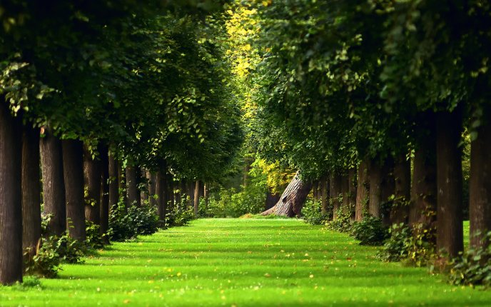 Download Wallpaper Green Path In The Middle Of Forest