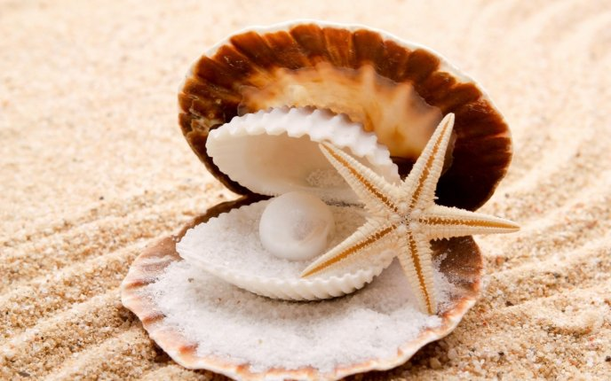 Shells from the ocean - beautiful white perl