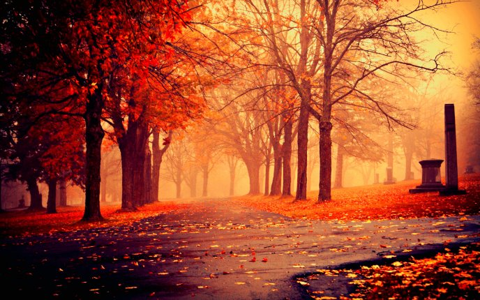 Red Autumn light in the park - HD wallpaper