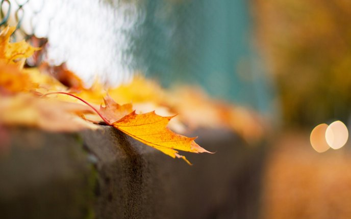 Macro Autumn leaf in a blurry background - HD wallpaper