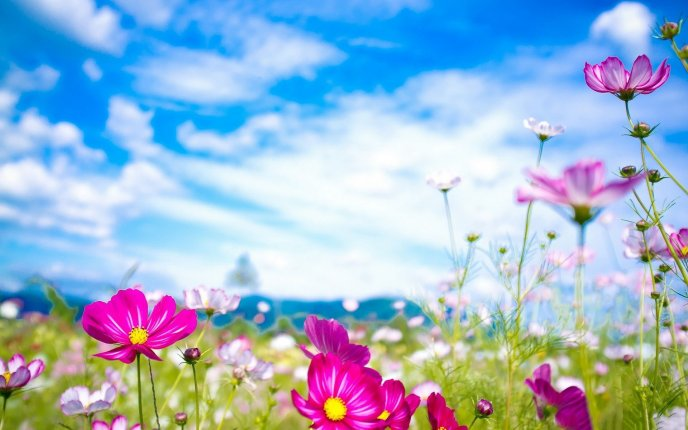 Download Wallpaper Good morning spring season - Flowers on the field