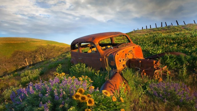 Download Wallpaper Old and rusty car in the middle of field with flowers