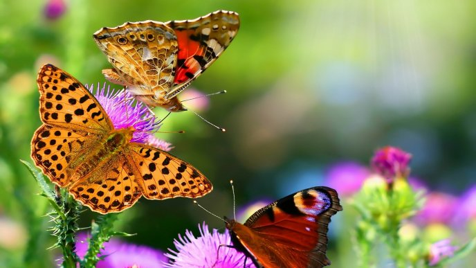 Golden butterflies in the colourful nature - HD wallpaper
